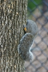Hot Springs National Park Promenade Squirrel