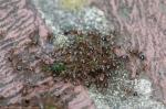 Hot Springs National Park Promenade Ants