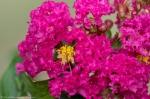 HSNP Tufa Terrace Hot Pink Blossom