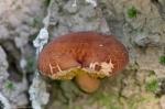 HSNP Floral Trail Rust Fungus