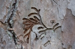 HSNP Lower Dogwood Trail  Stag Nature's Hieroglyph