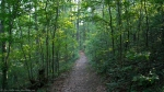 HSNP Upper Dogwodd Trail Spring