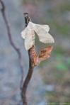 HSNP Promenade White Moth