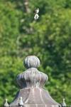 HSNP Quawpaw Bath House Northern Mockingbird
