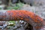 HSNP Promenade Orange Fungi on Downed Tree