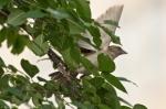 Hot Springs National Park Promenade House Sparrow