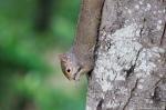 Hot Springs National Park Promenade Squirrel