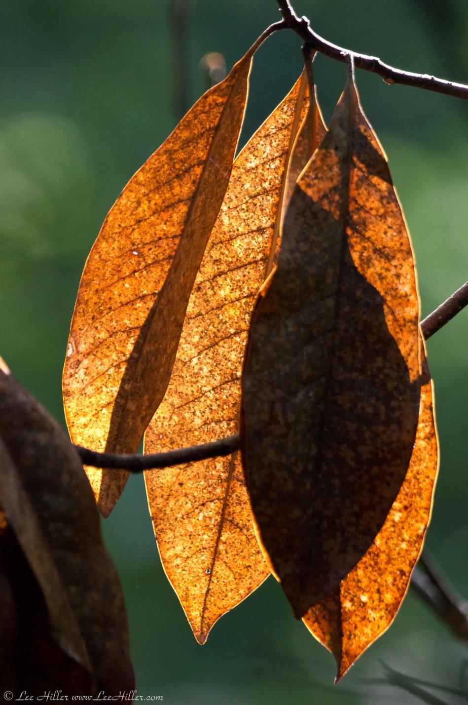 HSNP Fordyce Estate Sunset Trail Leaves