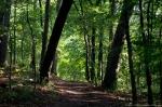 HSNP Fordyce Estate Sunset Trail Summer