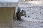 HSNP Hot Springs Mountain Top Squirrel