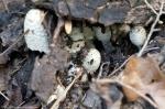 HSNP Peak Trail Fungi