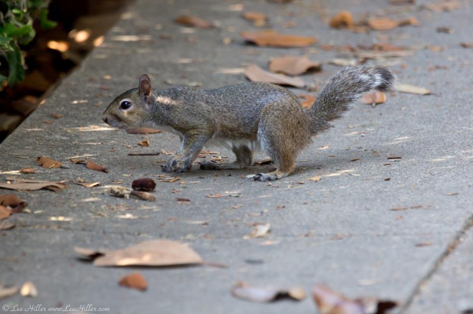 Hot Springs National Park Central Ave Entrance Squirrel