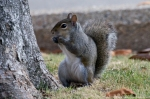 Hot Springs National Park Central Ave Entrance Squirrel