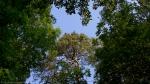 HSNP Floral Trail Spring