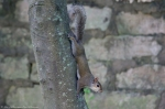 HSNP Fountain Trail Lawn Squirrel