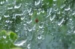 HSNP Hot Springs MT Road Spring Rain Spider Web