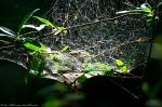 HSNP Tufa Terrace Spiderweb