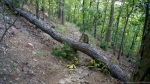 HSNP West Mt Trail Downed Tree