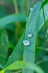 HSNP Fountain Street Lawn Rain Drops