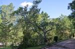 HSNP Promenade Broken Tree