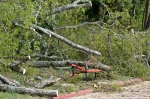 HSNP Promenade Downed Tree Bench