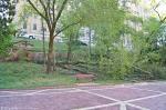 HSNP Promenade Downed Tree