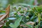 HSNP Tufa Terrace Trail Rain Drops
