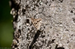 HSNP Hot Springs Mountain Rd Hackberry Emperor Butterfly