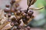 HSNP Tufa Terrace Trail Brown Berries in the Rain