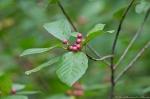 HSNP Tufa Terrace Trail Red Berries