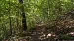 HSNP West Mt Oak Trail Late Summer