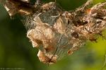 HSNP West Mt Oak Trail Nest