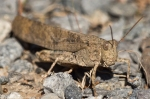 HSNP Hot Springs Mountain Trail Flying Grasshopper