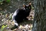 HSNP West Mt Oak Trail Stray Feral Black Kitten