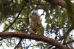 HSNP Dead Chief Trail  Squirrel with Nut