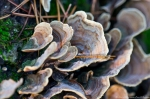 HSNP West Mt Oak Trail Colorful Fungi