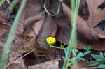HSNP Sunset Trail Pencil Flower