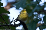 Lake Catherine Sate Park Horseshoe Mt. Trail Pine Warbler