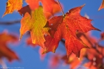 HSNP Promenade Autumn Leaves