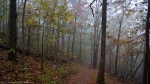 HSNP Peak Trail Autumn Fog