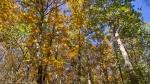 HSNP Gulpha Gorge Trail Autumn