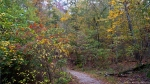 HSNP Hot Springs Mountain Trail Autumn Fog Leaves