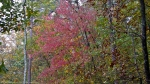 HSNP Upper Dogwood Trail Autumn Leaves