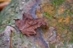 HSNP West Mt Canyon Trail Autumn Leaf