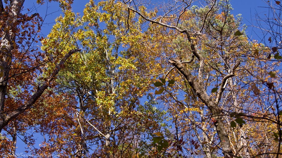 HSNP Lower Dogwood Trail Autumn Leaves
