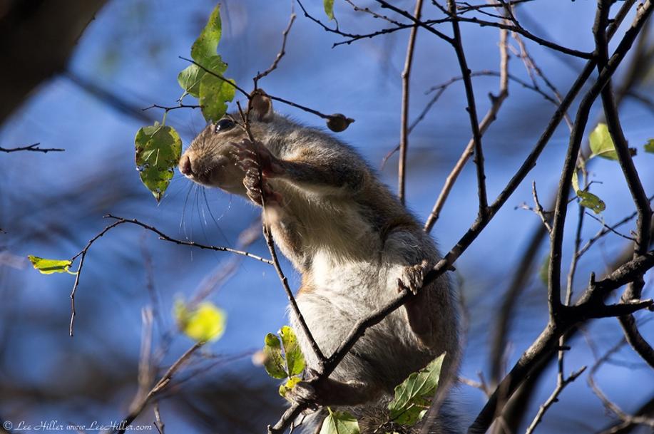 HSNP Tufa Terrace Trail Juvenile Squirrel