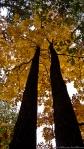 HSNP West Mt Oak Trail Autumn Twins