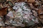 HSNP Floral Trail Rock