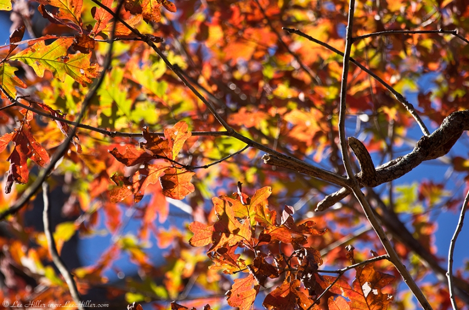 HSNP Hot Springs Mountain Trail Autumn Leaves