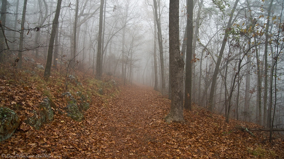 HSNP Short Cut Trail Autumn Fog
